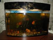 продам аквариум cо всем!!!!!