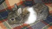 Веселые и забавные вислоухие и львиноголовые карликовые крольчата